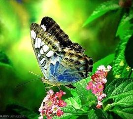 Beispiel für Entwicklung : Schmetterling