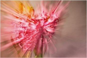 hyacinthus zoom | Workshop-Themen 2011 » März 11: Geschwindigkeit - Bewegung | uschi dreiucker / pixelio