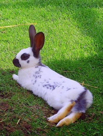 Schneller als man denkt, steht Ostern vor der Tür... | Säugetiere » Haus- und Nutztiere | M. Großmann / pixelio