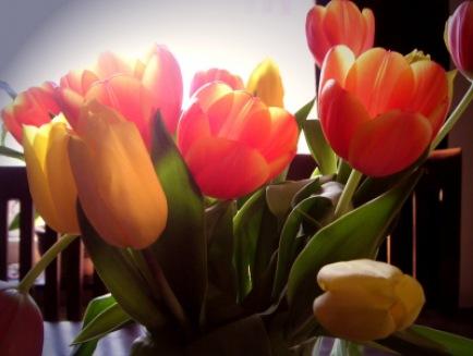 Tulpen im Gegenlicht | Blätter & Blumen » Tulpen | A.Dreher / pixelio