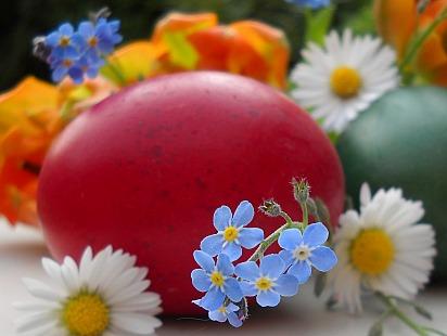 Vergiss mein nicht: Ostern! | Events » Ostern | Rita Gäbel / pixelio