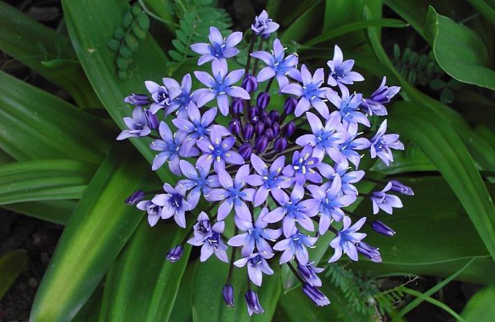 Praxis-Blume Britta Lemke