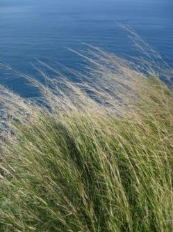 Ein windiger Tag | Landschaft & Natur » Wind & Wetter | twinlili / pixelio