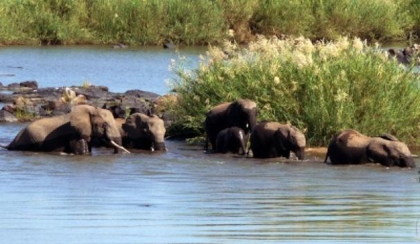 Elefanten überqueren den Letaba-River | Städte » Afrika | Janine Grab / pixelio