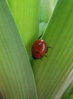 abwärts | Wildtiere » Pflanzen- und Insektenfresser | Marion Heidemann-Grimm / pixelio