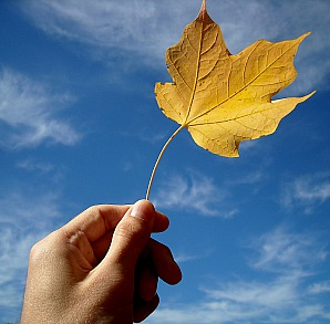 holding onto fall