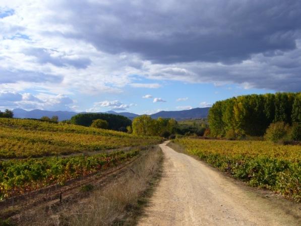 Vera Meinold - Wunder passieren überall - mein Weg nach Santiago de Compostela