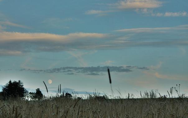 Meadow Before Full Moon | Wiese vor Vollmond