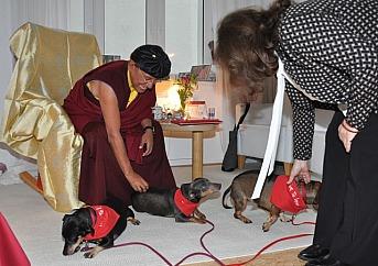 Gyalwang Drukpa mit Hunden