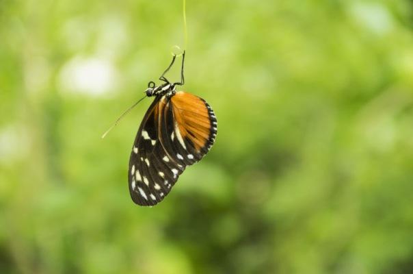 Kathrin Sohst: Schmetterling