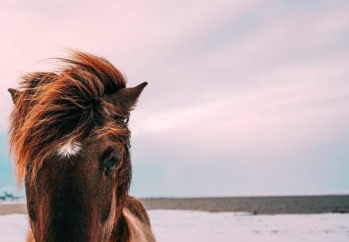 Pferd Pexels/pixabay 113