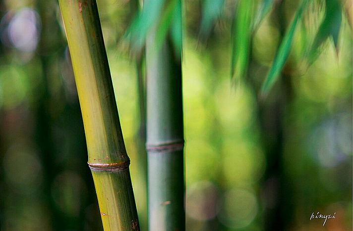 竹 Bamboo - 16 Fragen für den Jahresrückblick: Dr. Manfred Mohr
