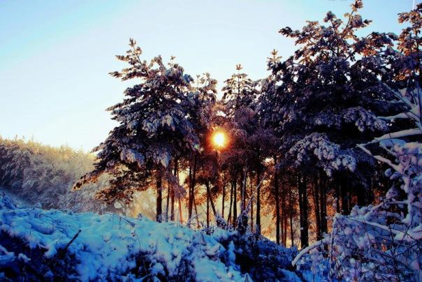 Wald winter Jedidja/pixabay 132