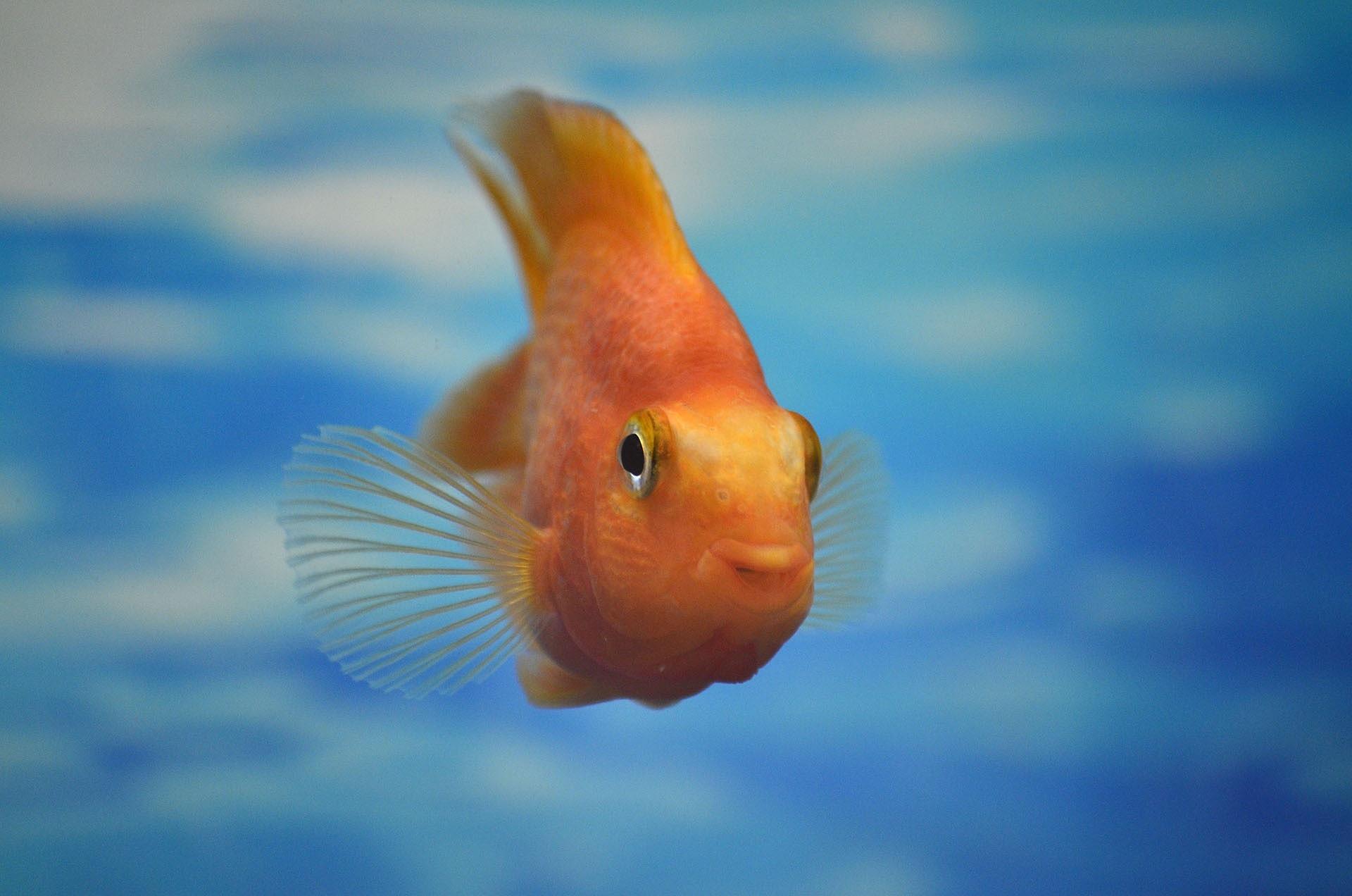 Die fische wie ein fisch im wasser lebe liebe for Kleine fische