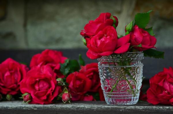 Rosen rote congerdesign/pixabay 36