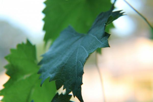 ökologisch Greyerbaby/pixabay 62