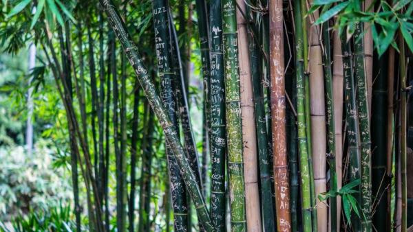 Bambus raedon/pixabay 119