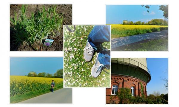 Gartenversand und Pflanzenversand Gärtner Pötschke - Collage