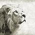Eine poetische Reise durch den Tierkreis: Der Löwe ~ der Prunkvolle