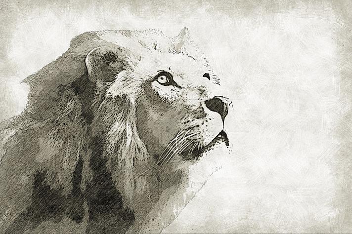 Leo mochawalk/pixabay 77
