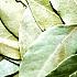 Ein Tee aus diesen Blättern hilft bei der Entkalkung der Blutgefäße und wirkt gegen hohen Blutdruck