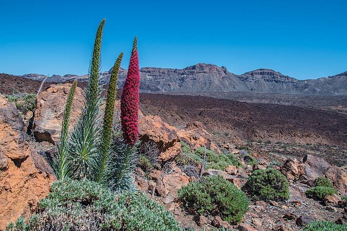 Teneriffa ökologisch: ein außergewöhnliches und vielseitiges Naturparadies