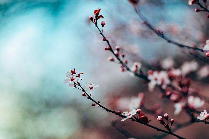 Spring nitishm/unsplash 7