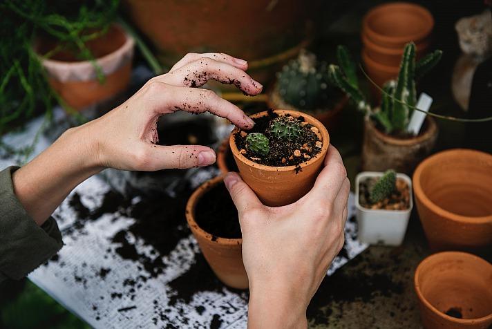 Eigenes Cannabis kann sicherer sein. Der Anbau ist dennoch illegal!
