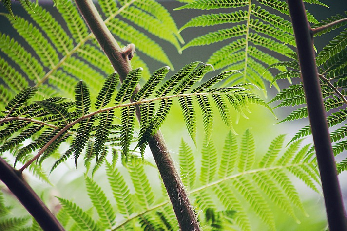 Forest Free-Photos/pixabay 155