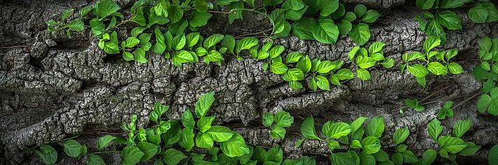 Forest jeonsango/pixabay 31