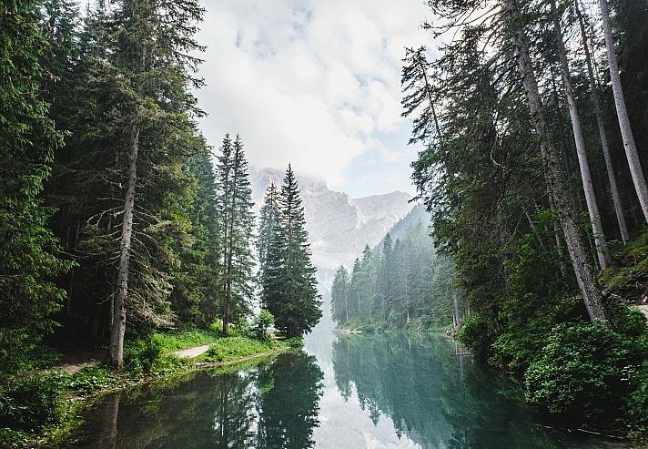 Forest lucabravo/unsplash 3
