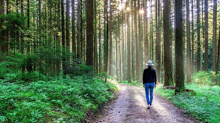 Forest woman PhotoGranary/pixabay 72