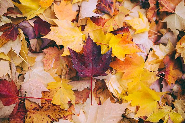 Tierkreiszeichen Waage: Yin und Yang im Oktober