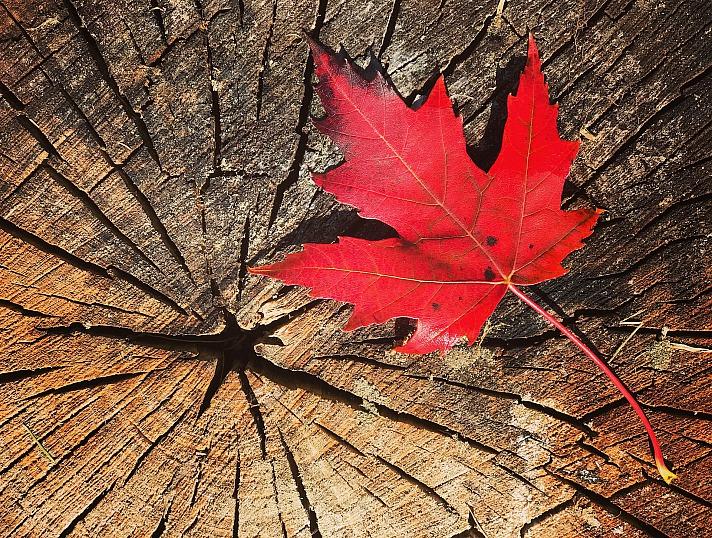 Blätter fallen Design_Miss_C/pixabay 34