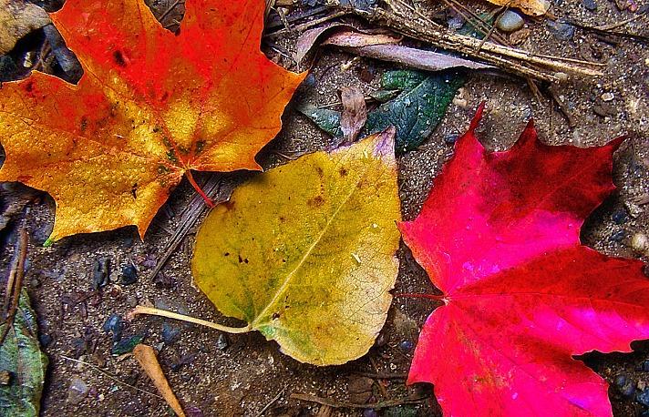 Blätter fallen STVIOD/pixabay 59