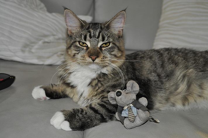 Katze maus Fotobox_Petra0107/pixabay 36