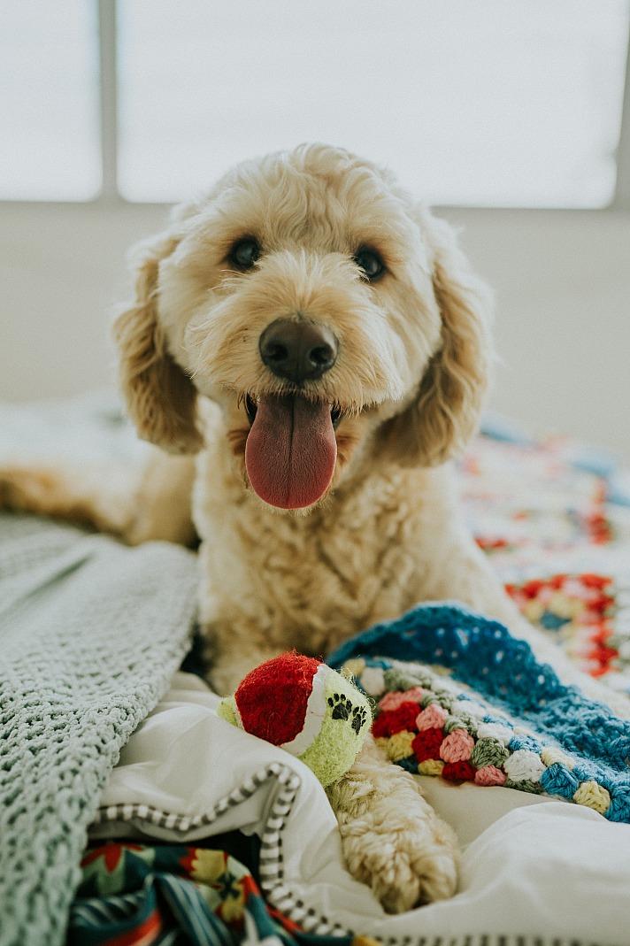 Ein Orthopädisches Hundebett für Ihre Fellnase