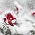 Rose im Schnee - Deine Eigenliebe