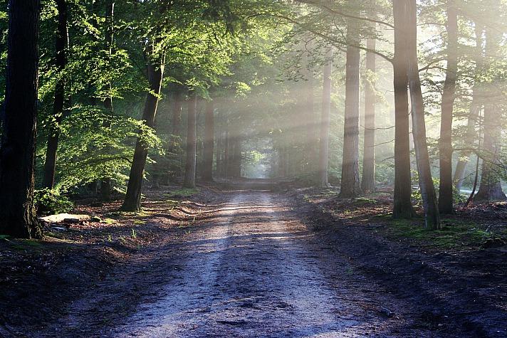 Wald-Aufnahmen verwandeln das Zuhause in einen Ort der Ruhe