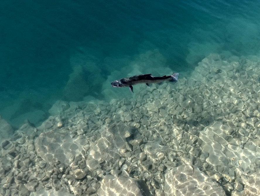 Parkhotel Gunten: im kristallklaren Wasser des Sees fühlen sich die Fische sichtlich wohl