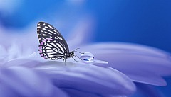 Schmetterling Soorelis/pixabay 11