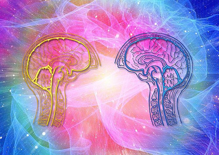 Unterschiedliche Aufgaben und Bereiche des Gehirns