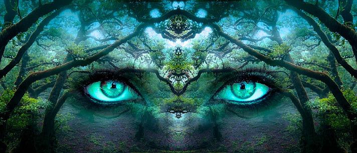Vom Opfer zum Schöpfer - Wie Meditation das Gehirn beeinflusst