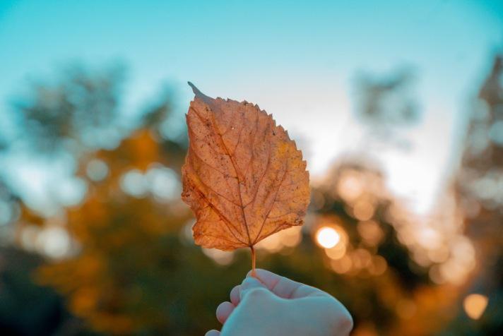 Mit diesen Songs freuen wir uns auf den Herbst
