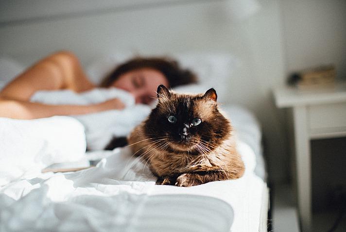 Self Care - Erholsam viel schlafen, ausgeruht durch den Tag
