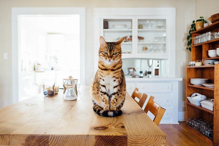 Welches Haustier zu mir passt - eine wichtige Weichenstellung