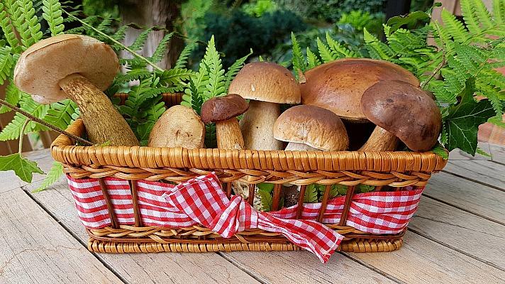 Die Vielfalt der Pilze - wie sie schmecken und was in ihnen steckt