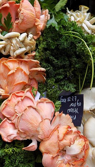 Vielen Pilzen werden heilende Wirkungen nachgesagt