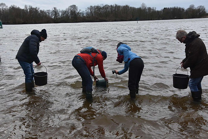 Live To Love: Es ist sehr bewegend zu erleben, wie die zarten kleinen und größeren Fische total enthusiastisch aus den Eimern in das Wasser der Elbe hineingleiten
