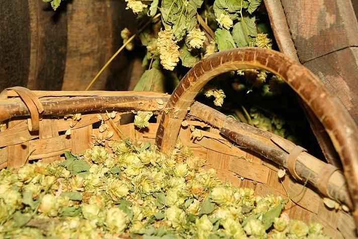 Destillerie Brauerei Ettal: Hopfen im Brauereimuseum
